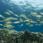 Islands, Dahab Rotes Meer