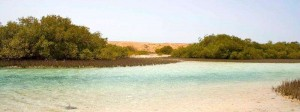 Ras Mohammed National Park by Kat Rowe
