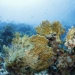 Nice corals
