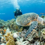Baker behind the turtle