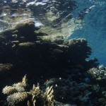 Reef and surface