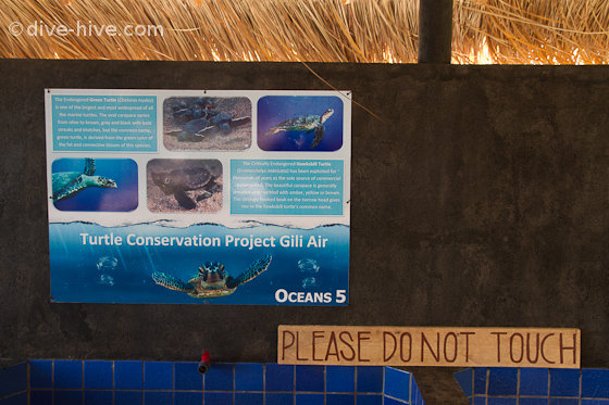 Oceans 5 - turtle conservation project