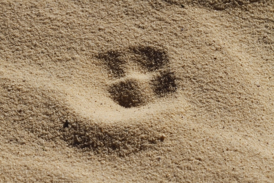 Footprint in the desert