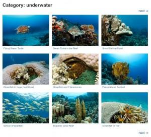underwater pictures